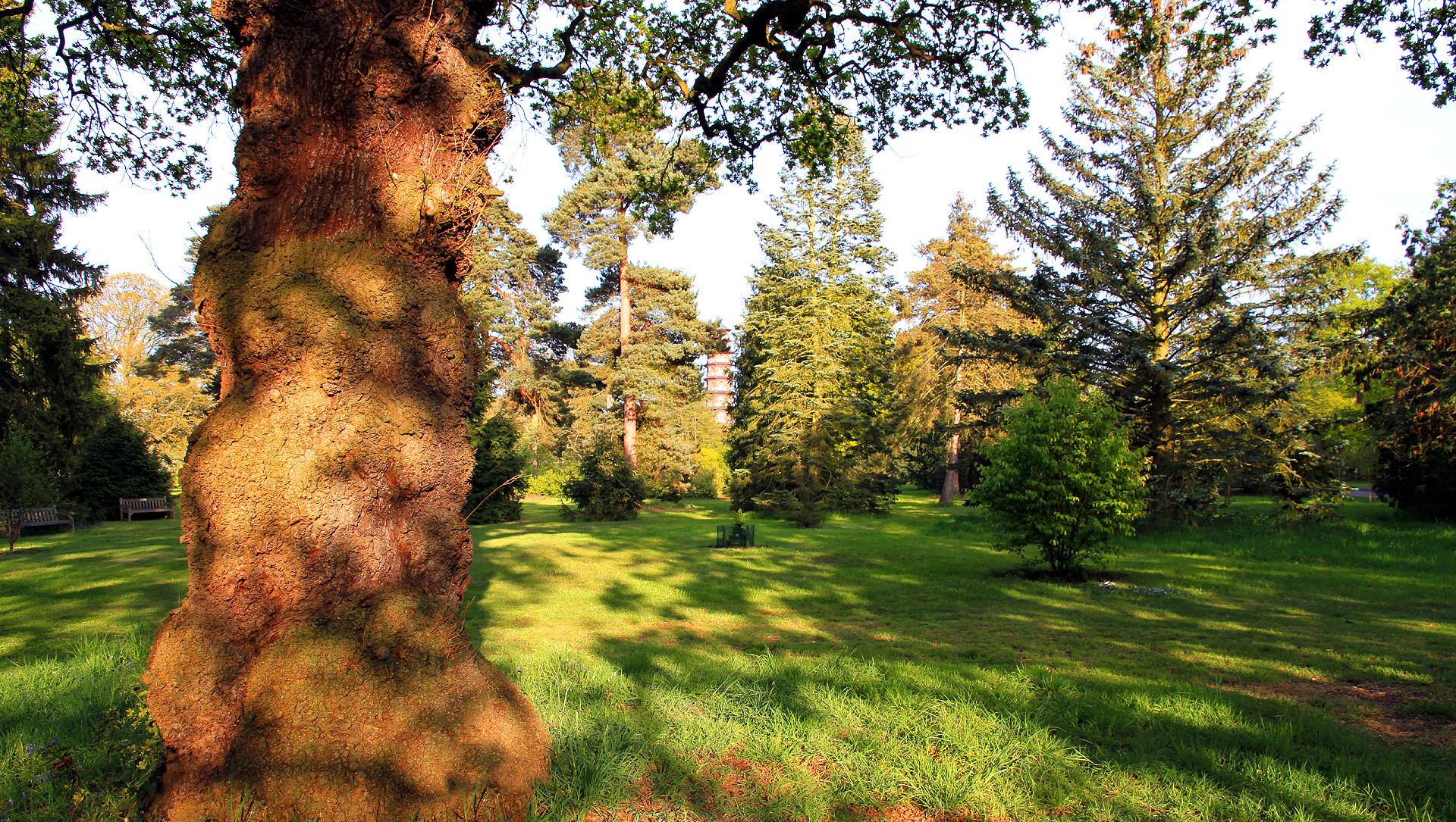 oak tree Wallpaper Background 37502 1920x1085