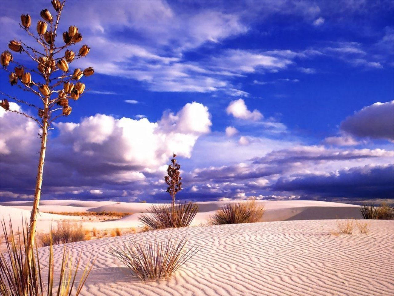 Музыка в пустыне  № 3622277 бесплатно
