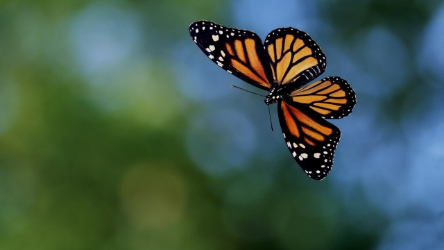 Cute butterfly hd wallpaper Hd Wallpapers Stillgalaxy 640x360