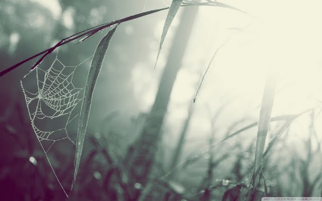 Spider Web Wallpaper Walltor 640x400
