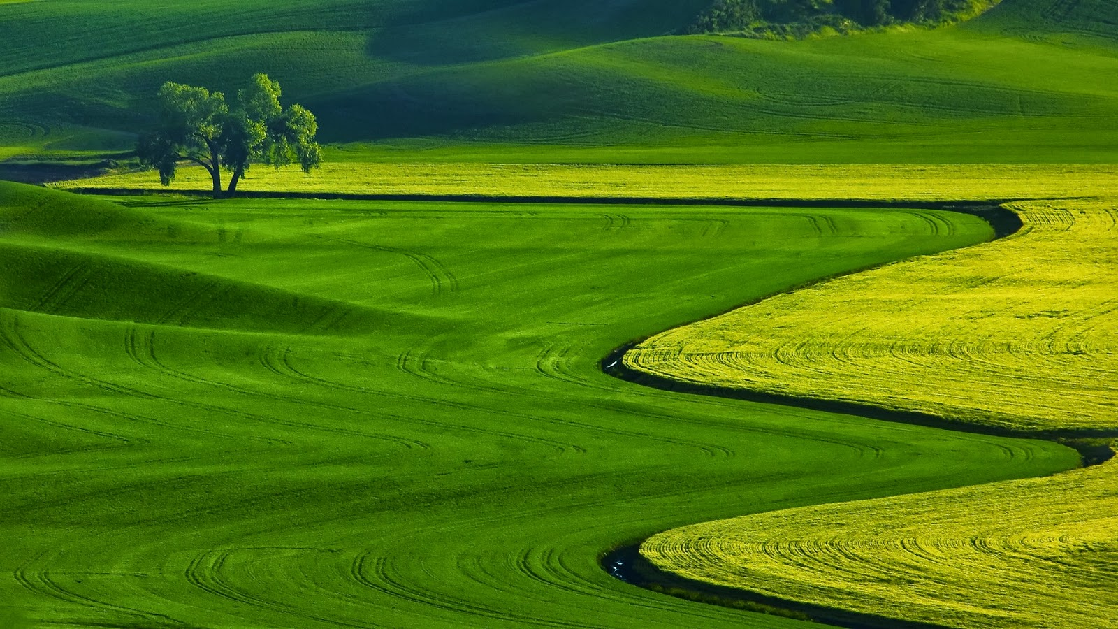 Full HD Nature Wallpapers Download For Laptop PC Desktop 1600x900