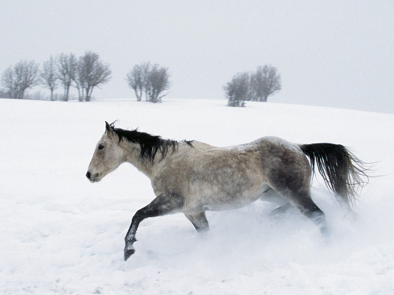 Horse Desktop Wallpapers for HD Widescreen and Mobile Page 2 1600x1200