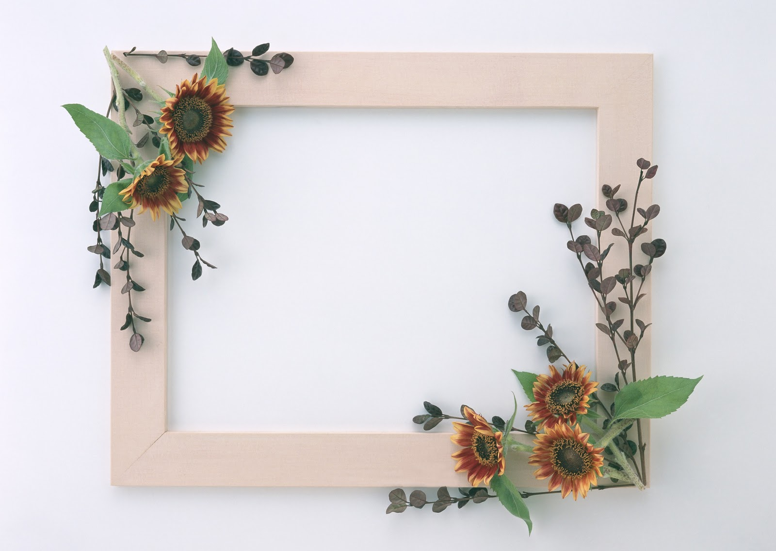 Beautiful Stylish Flowers Photo Frames DOWNLOAD WALLPAPERS HD FREE 1600x1136