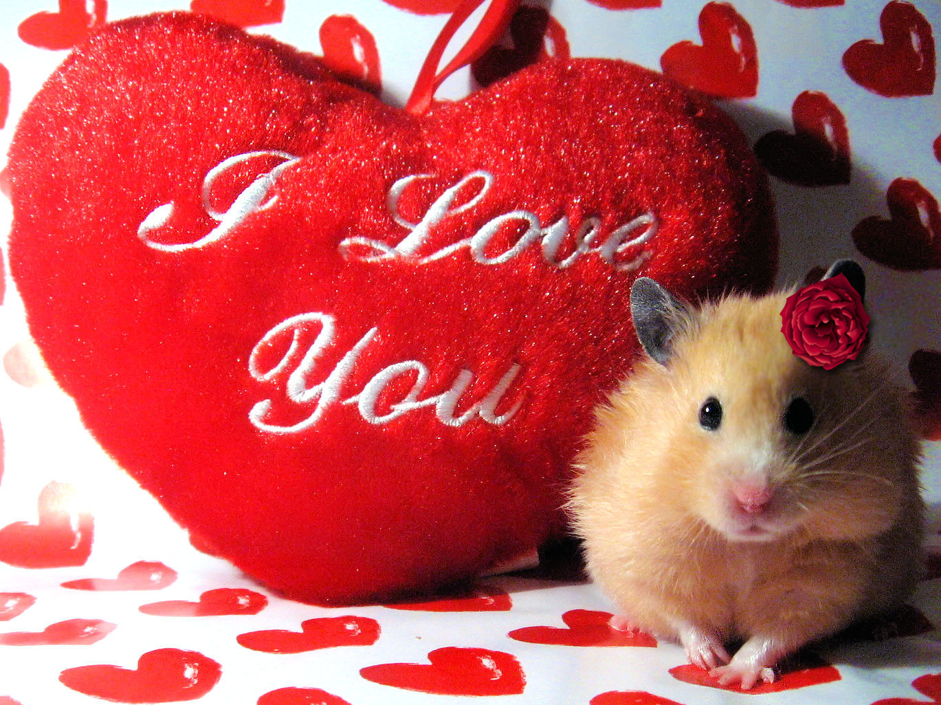 Cute Valentines Day Wallpapers Hd Wallpapers Download 1369x1025