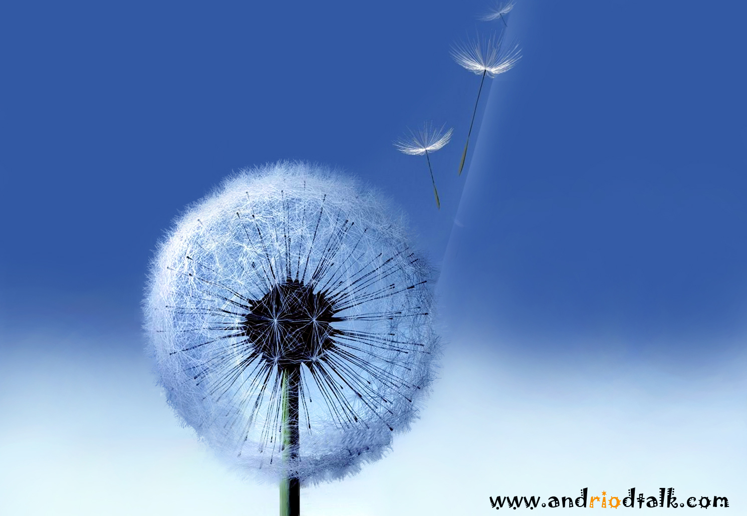 Dandelion live HD animated wallpaper android apk Android Talkative 1491x1030
