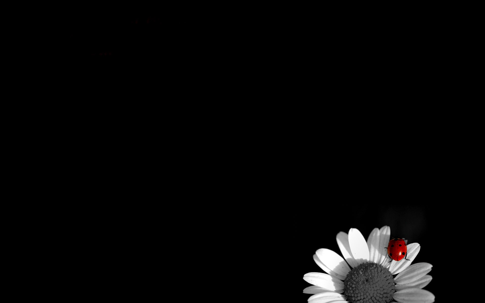Black and white flowers wallpapers HD 1920x1200