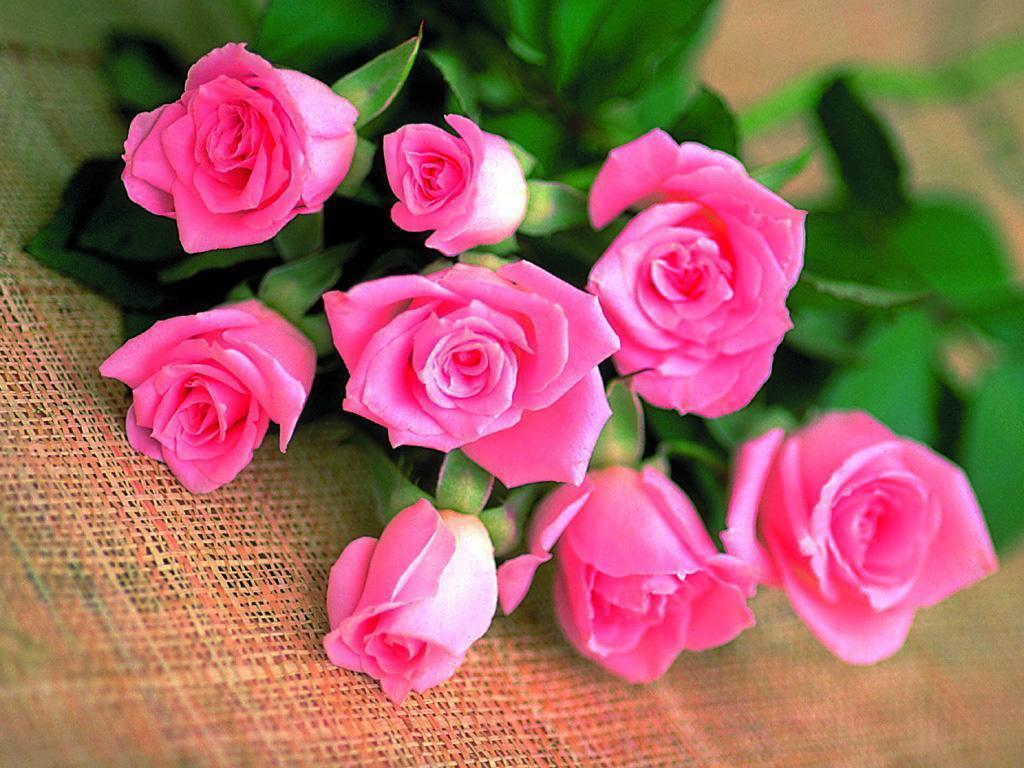 Free Download The Rose Of Love Roses Wallpaper 13966614