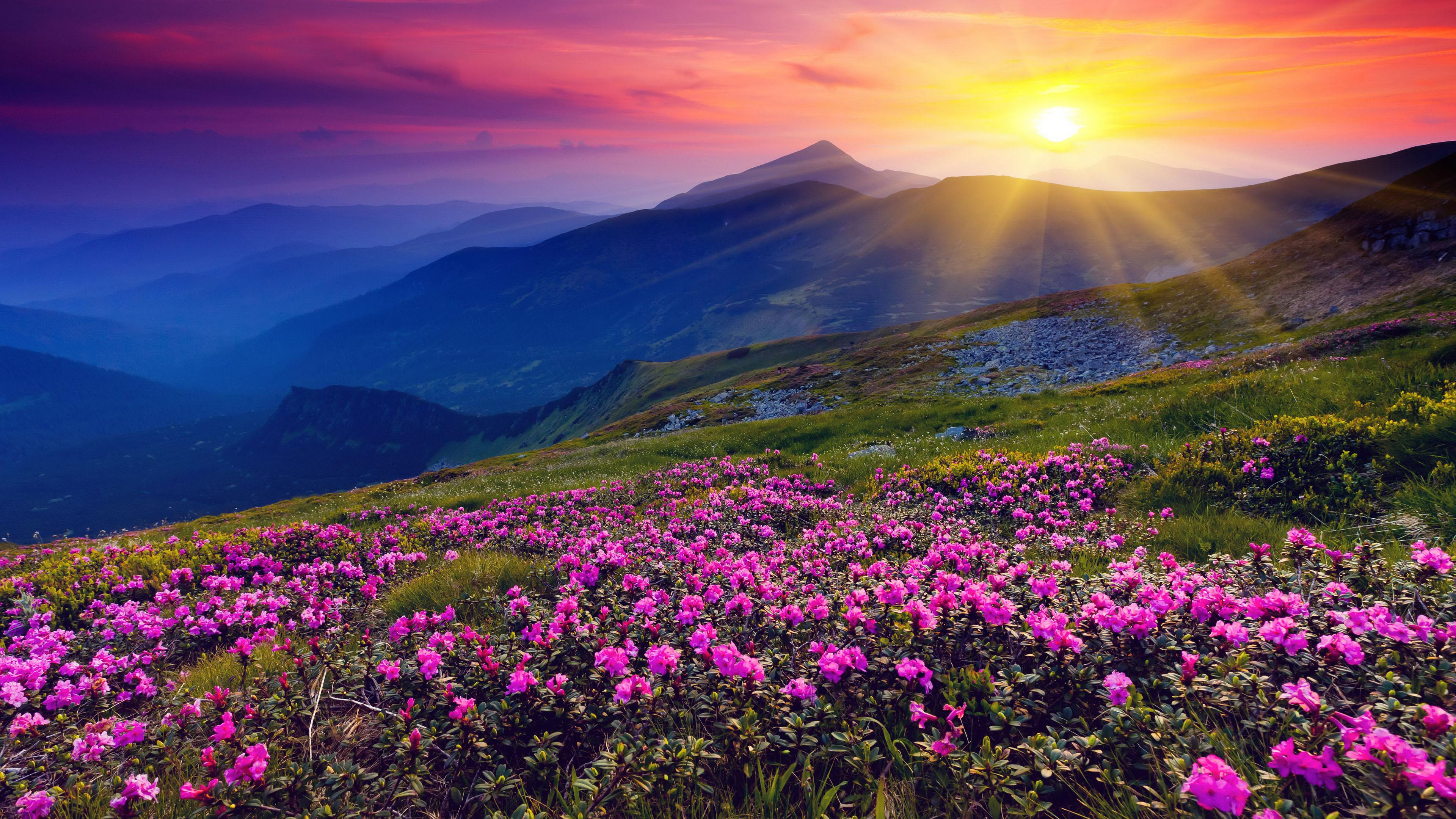 Flowers Hills Landscape Sunrise Wallpaper HD F 5602 Wallpaper 3840x2160