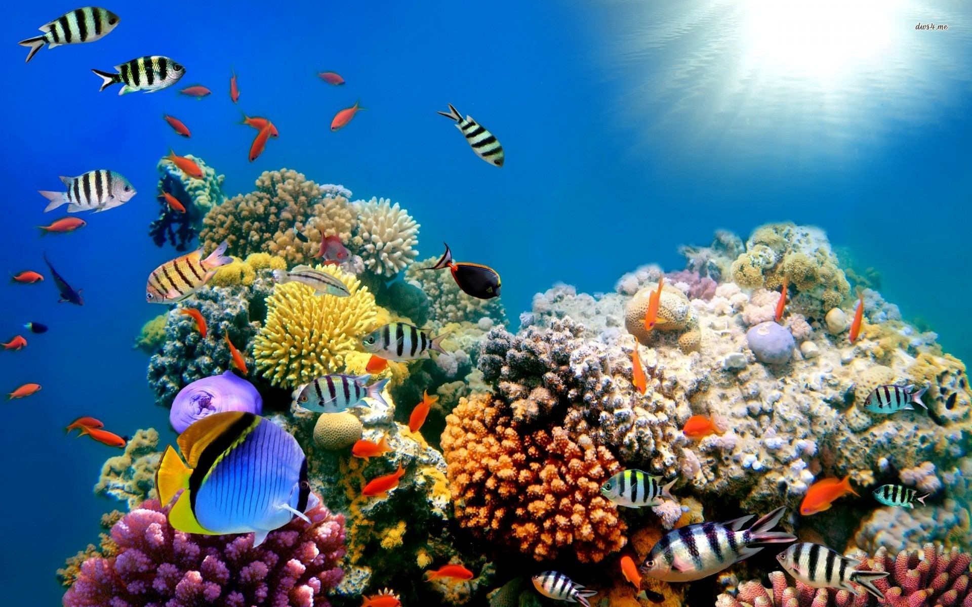 wallpaper of fishes in sea