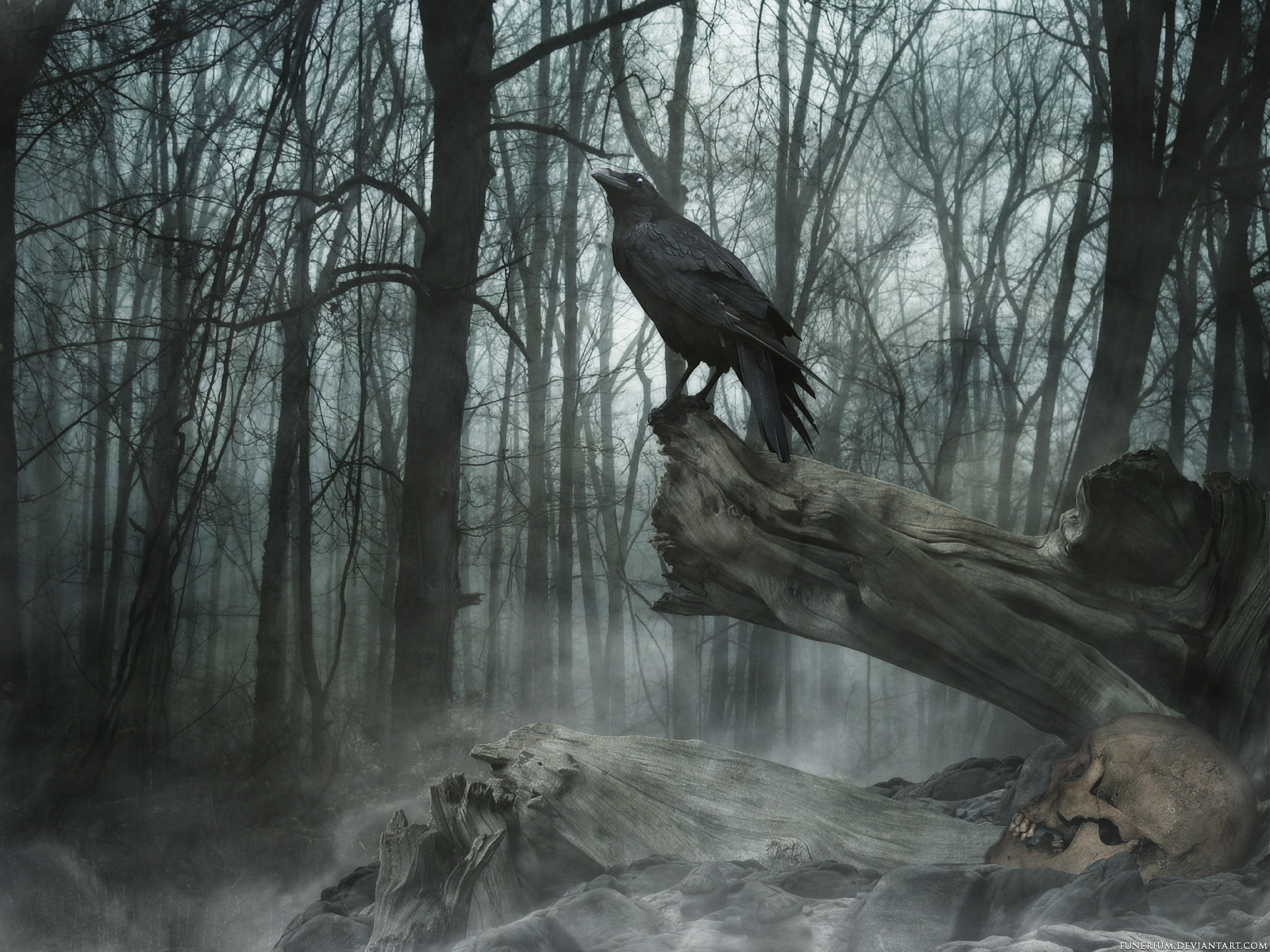 the raven Wallpaper Background 20449 1600x1200