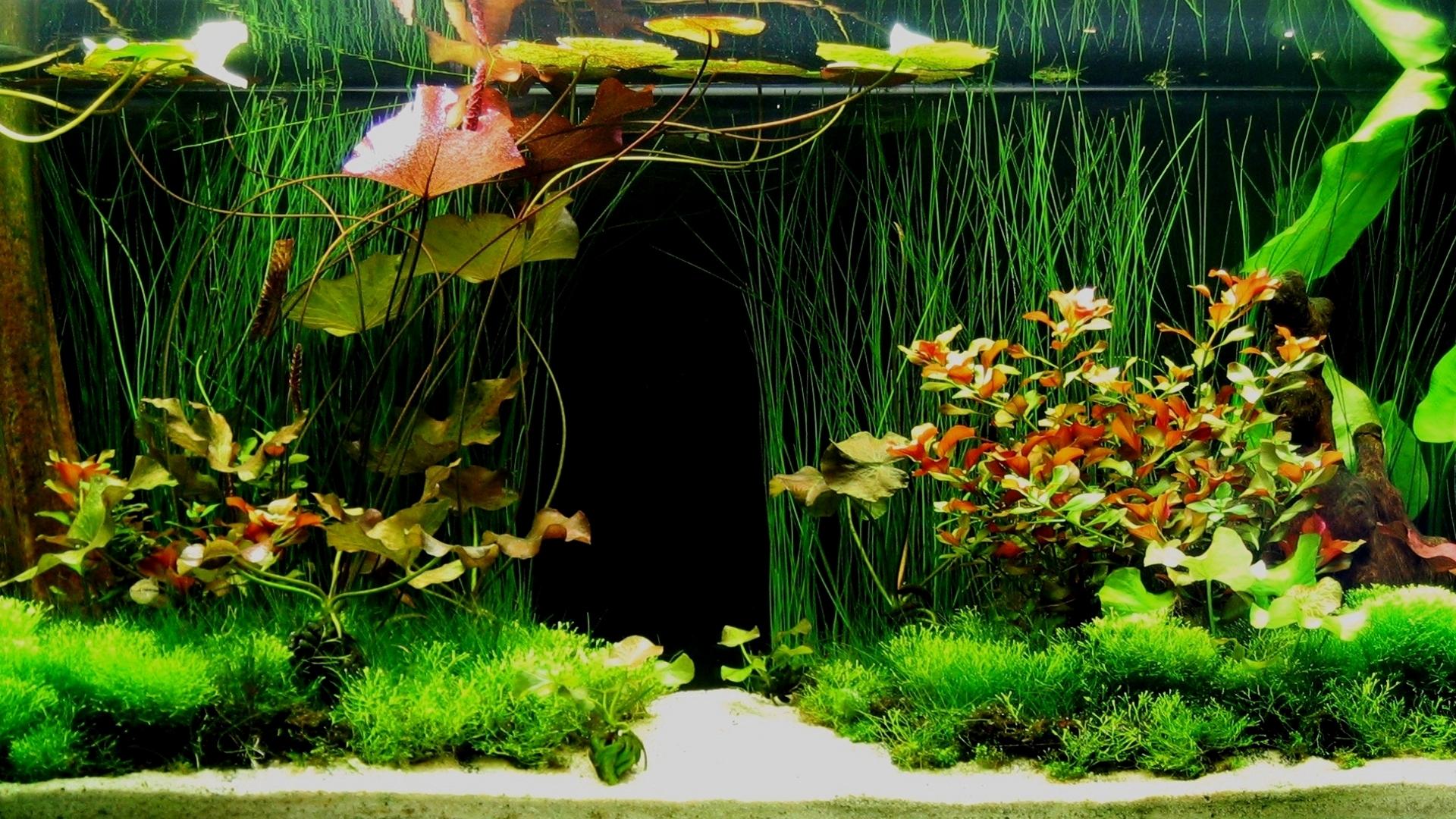 Aquarium 3D Backgrounds Download HD Wallpapers 1920x1080