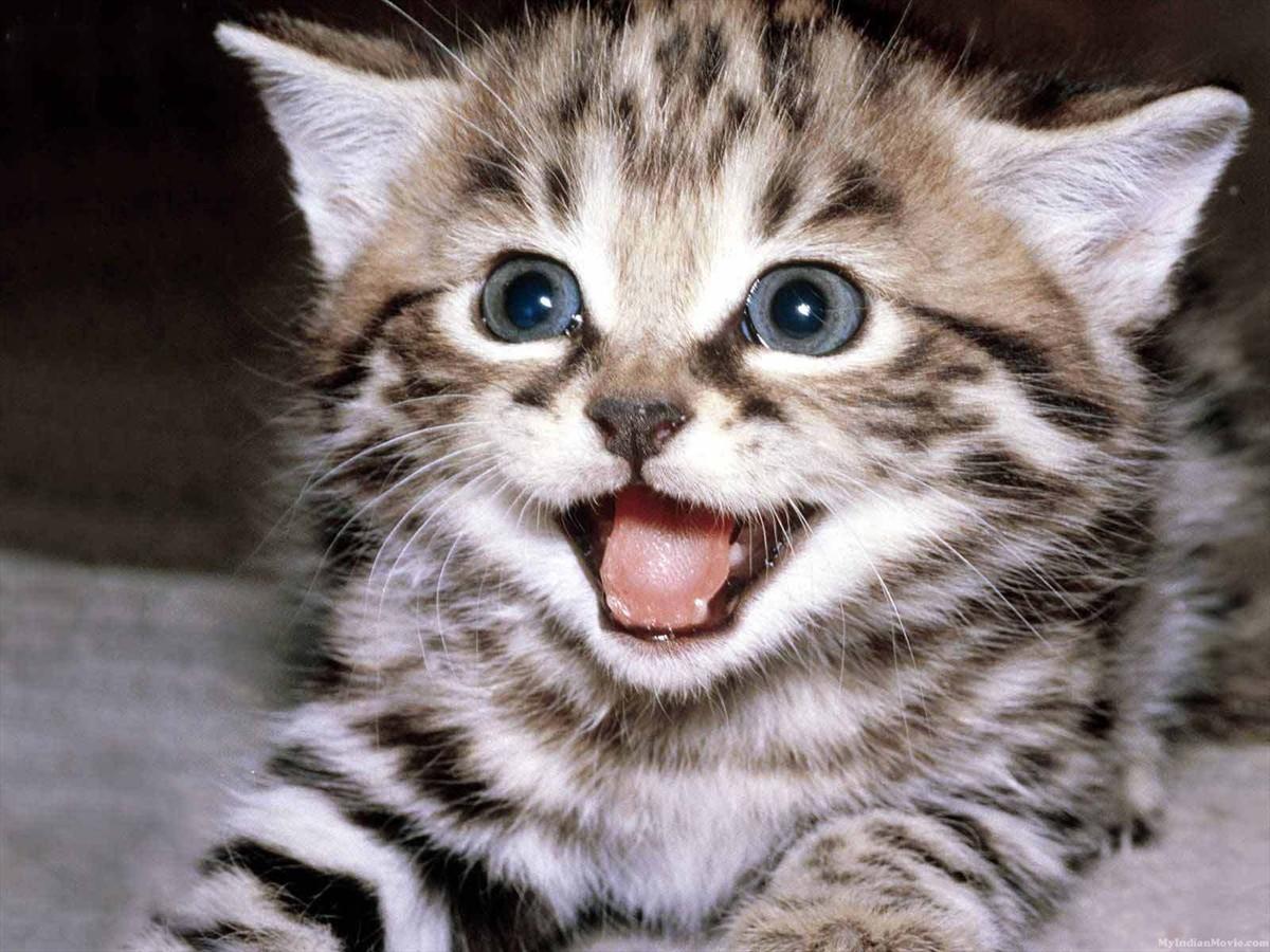 Desktop Hd Walpapers Cute Kittens Desktop Hd Walpapers Pictures 1200x900
