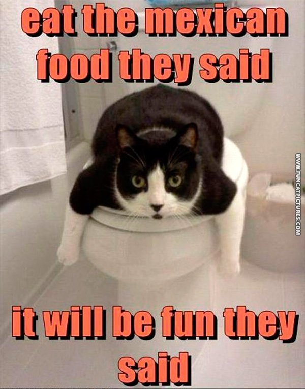 Cats and Taco Bell doesnt mix Fun Cat Pictures 600x765