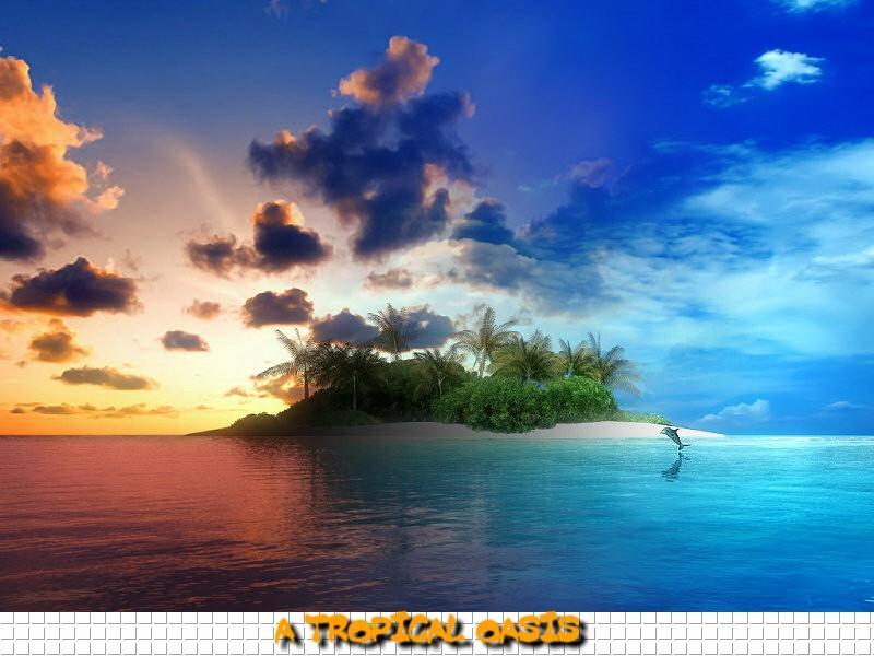 tropical oasis wallpaper wallpapersafari