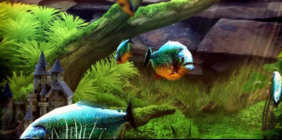 Piranha Aquarium 3D lwp live wallpaper v10 Apk ApkDreams 896x445