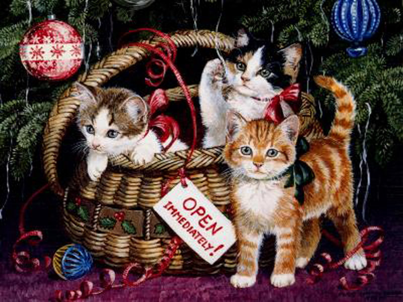 wallpaper for Cat lovers Christmas Wallpapaer Pictures of Cats 800x600