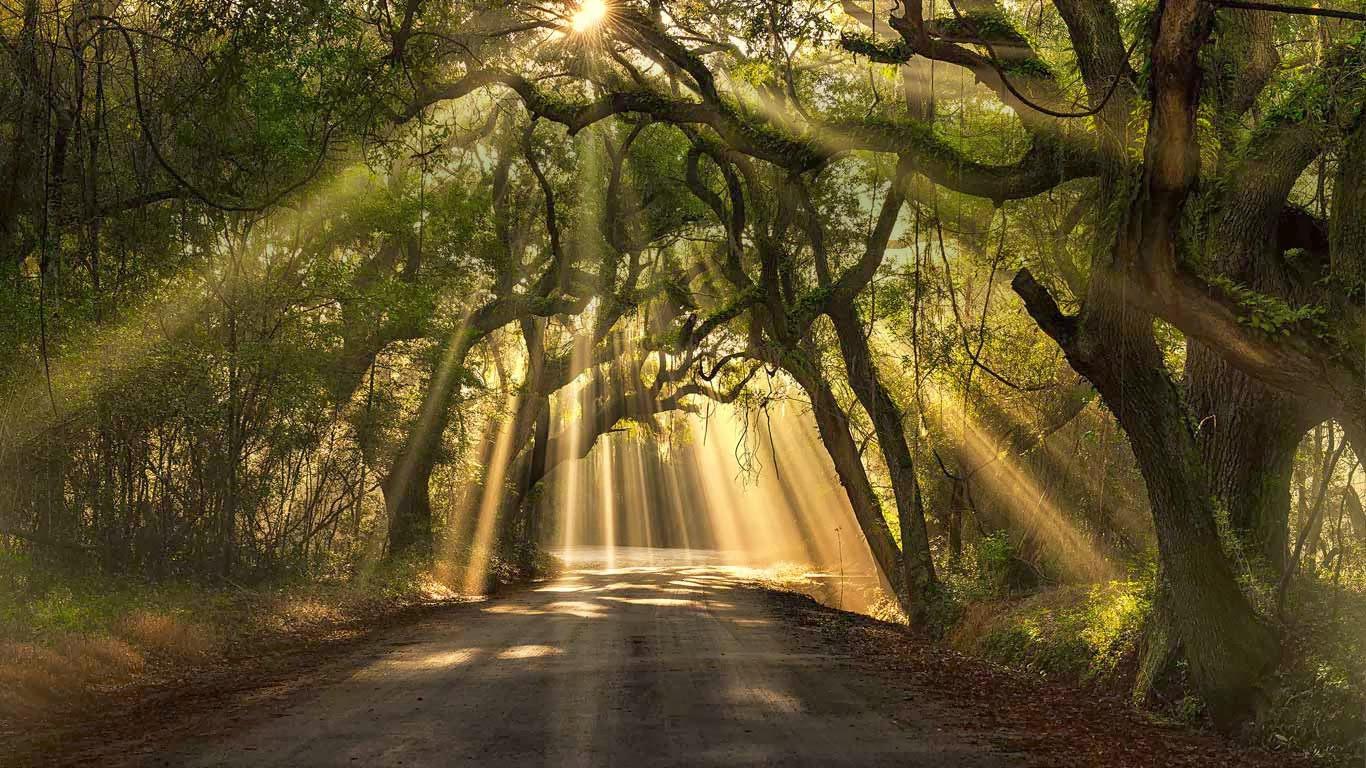road Edisto Island South Carolina Michael Woloszynowicz500px 1366x768