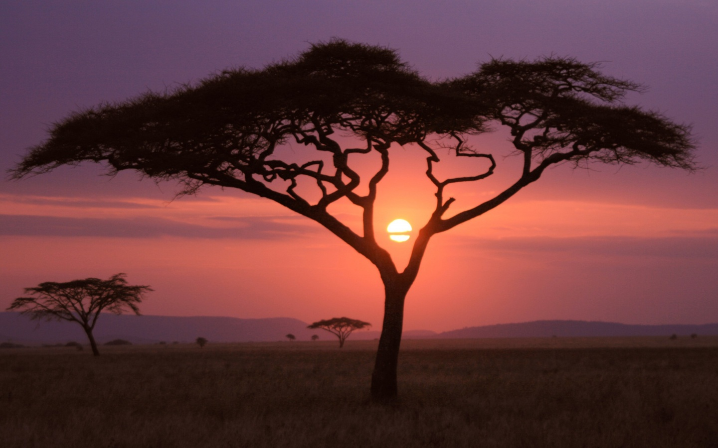 African Sunset Wallpapers HD Wallpapers 1440x900