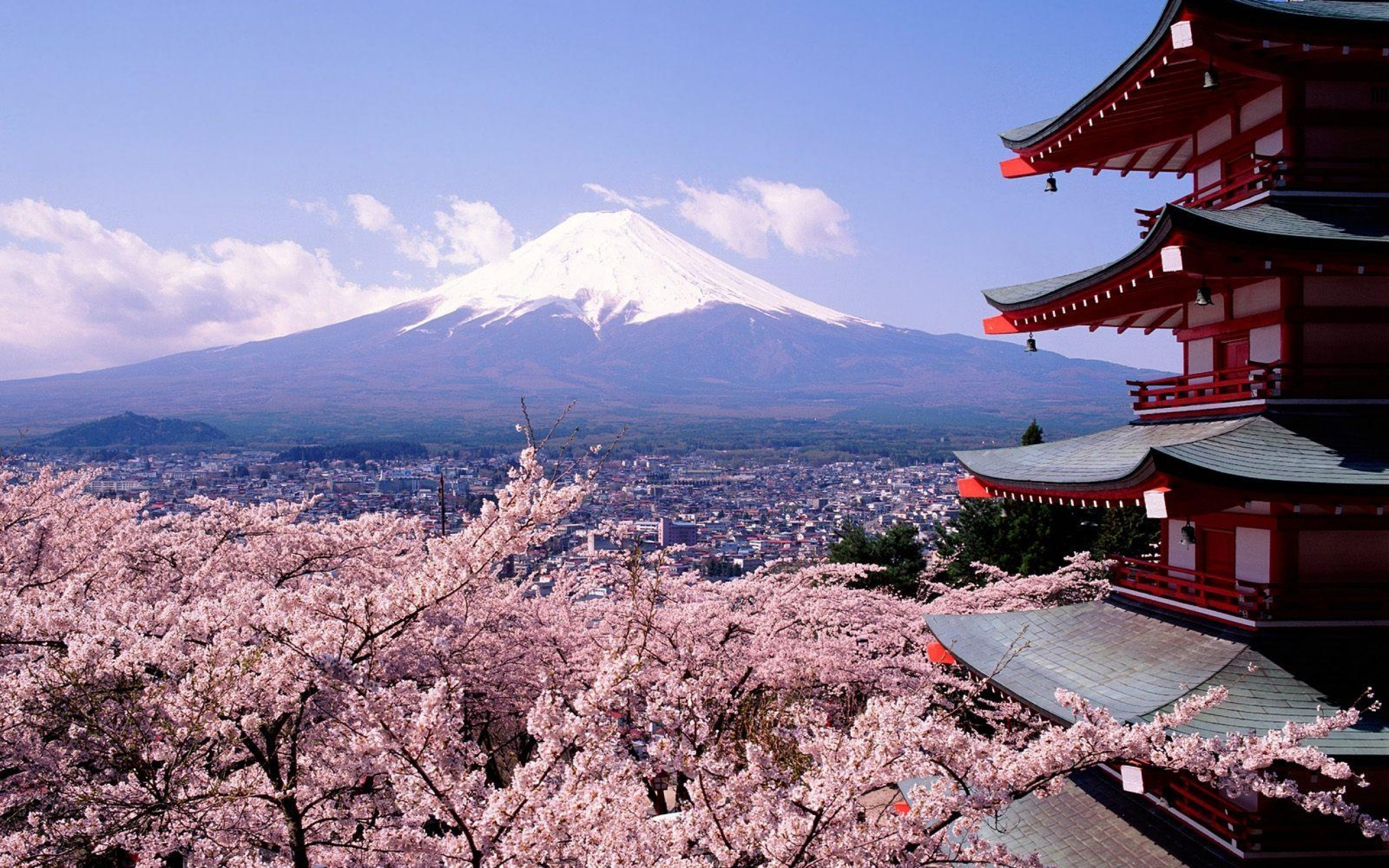 Tokyo Fuji Mountain Sakura Flower Wallpaper Background 2560x1600