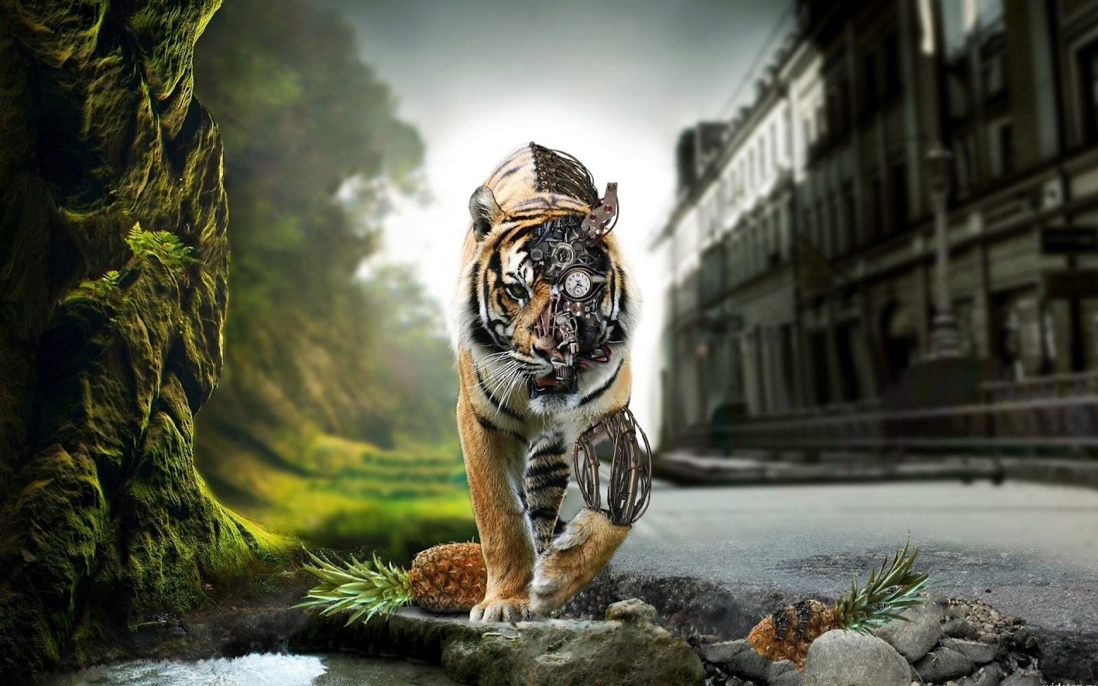 1600x1000px cool tiger backgrounds - wallpapersafari