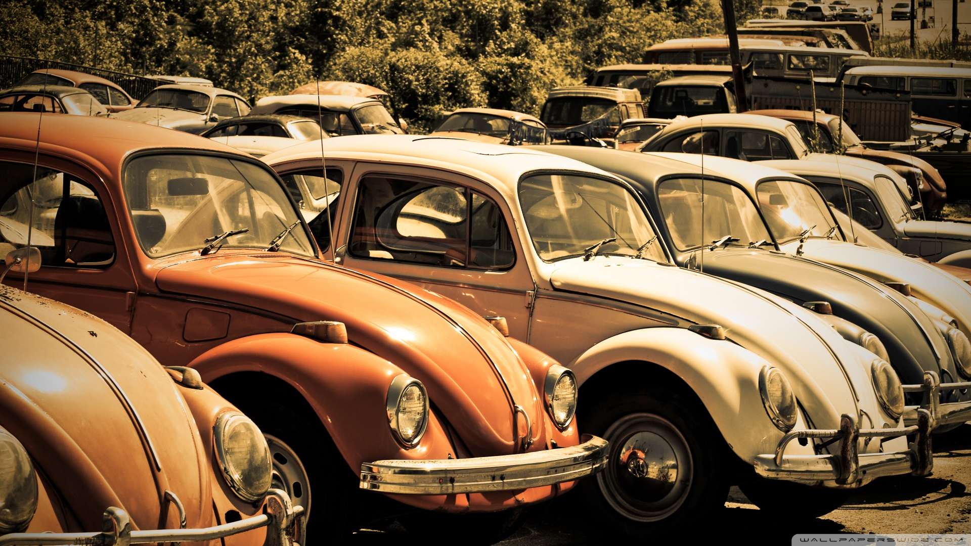 old volkswagen beetle junkyard wallpaper 19201080 BlogNOBON 1920x1080