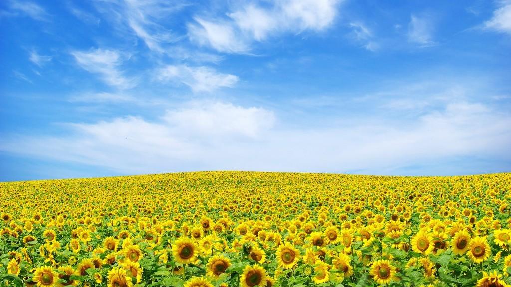 Desktop Wallpaper Flowers Full Size 1024x576