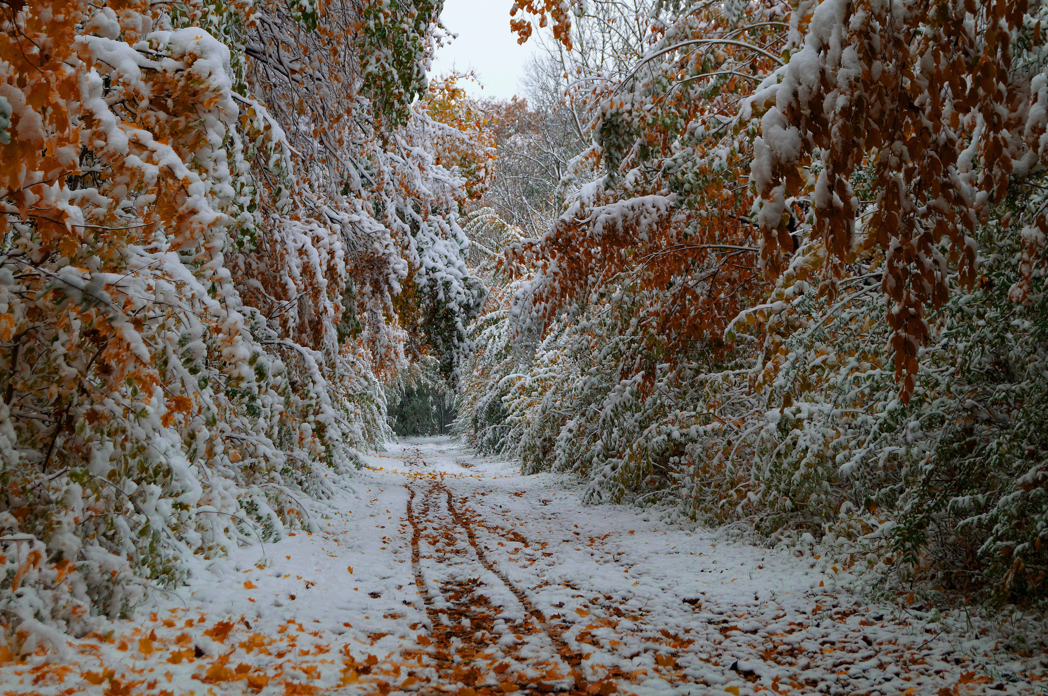 Trees leaves fall october the first snow the road wallpaper background 2048x1361
