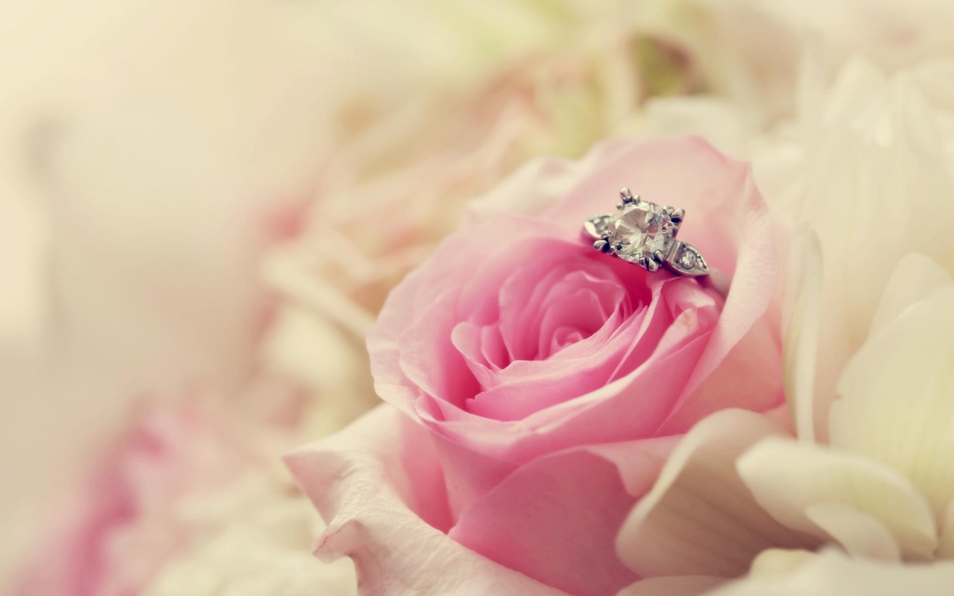 Beautiful Flowers And Rings For Wedding Wallpaper High Definition 1920x1200