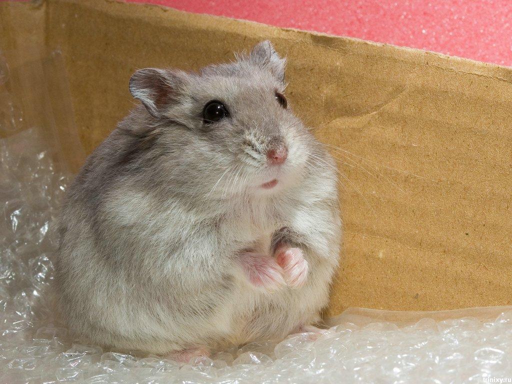 Cute Love Hamster Wallpaper Wallpaper ME 1024x768