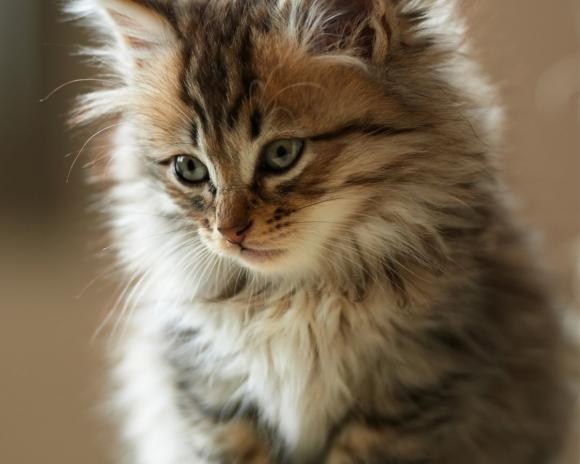 foto kucing lucu keren terbaru serius   Ngulikco 580x464