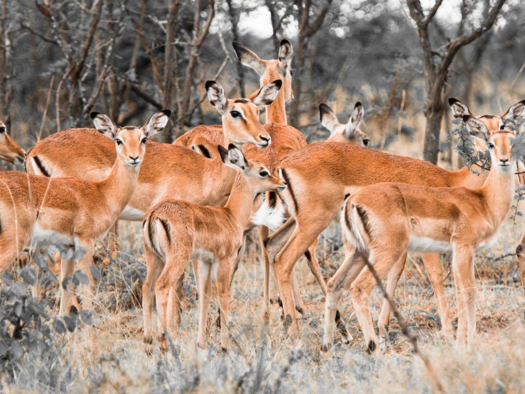 deer wallpaper 1024x768