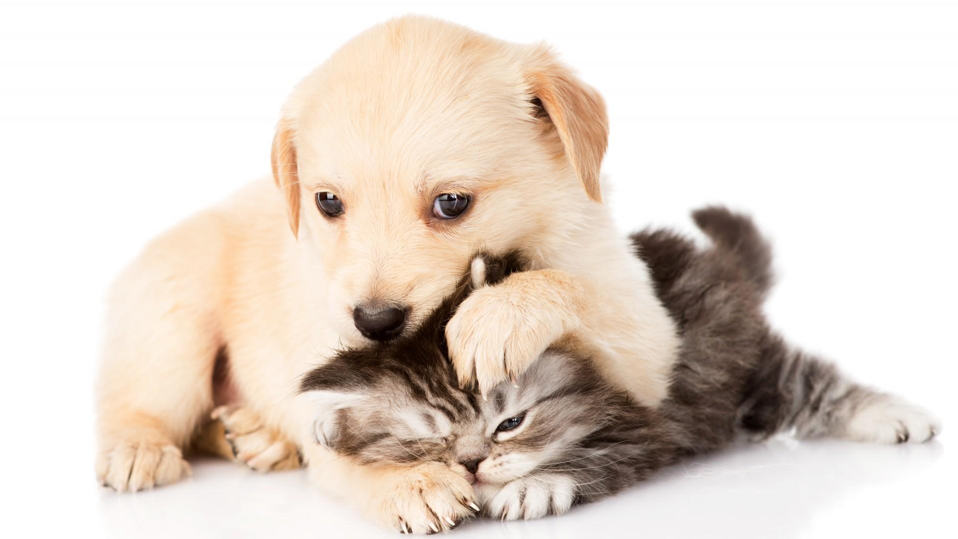 Kitten And Puppy Wallpaper [1920x1080