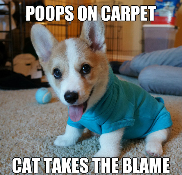 Funny Corgi Wallpaper Wallpapersafari