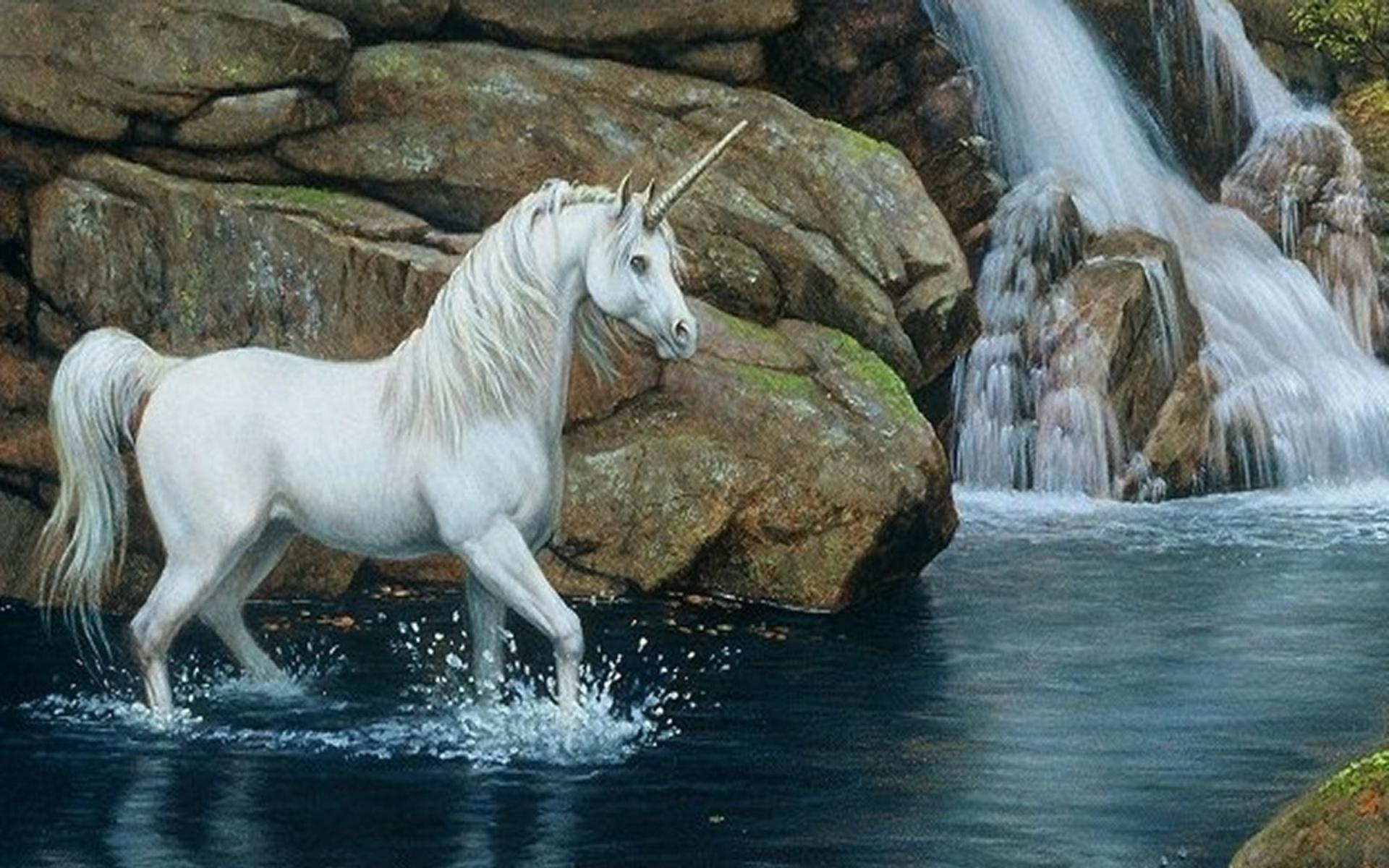 Free Download Horse Wallpaper Hd 1080p Desktop Backgrounds For Hd