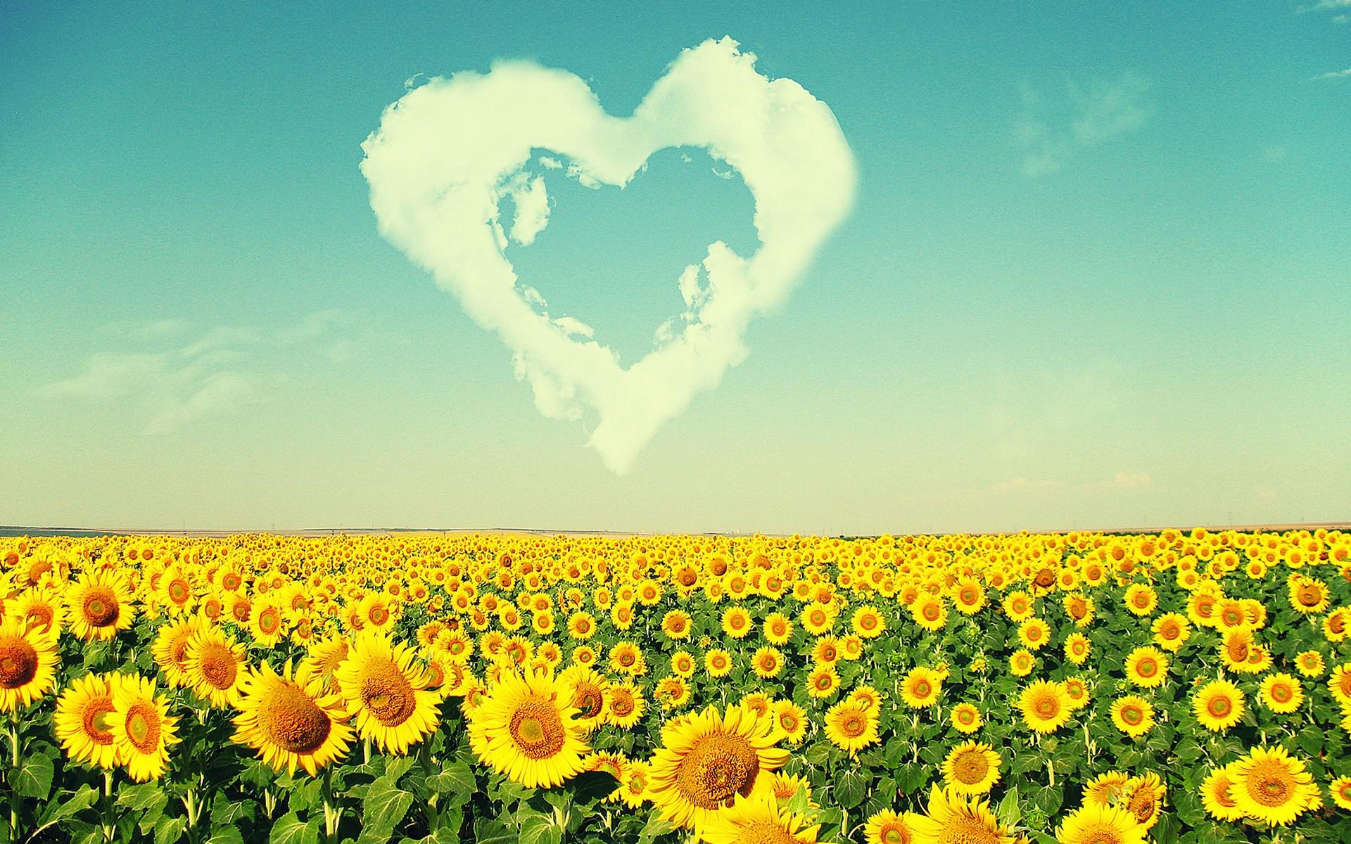 white sunflower background tumblr