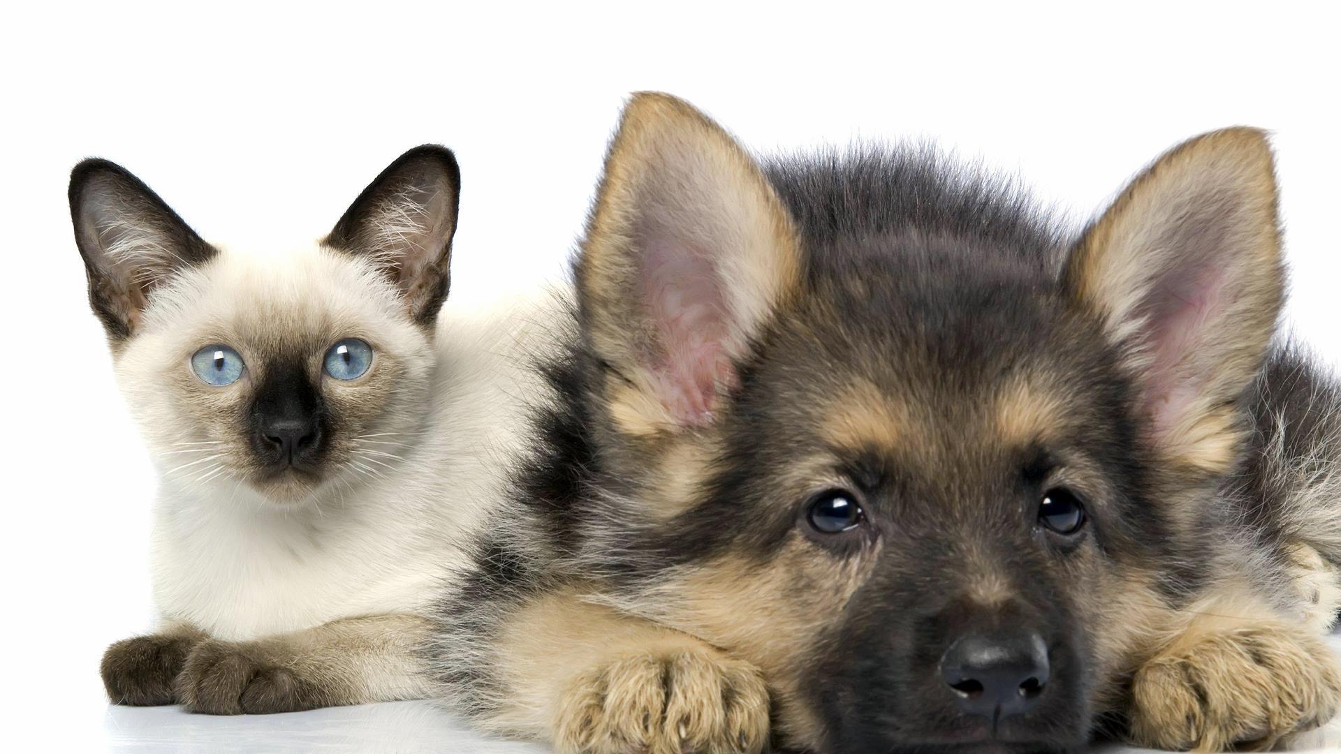 cute cat dog   Animals Wallpaper 34497785 1920x1080