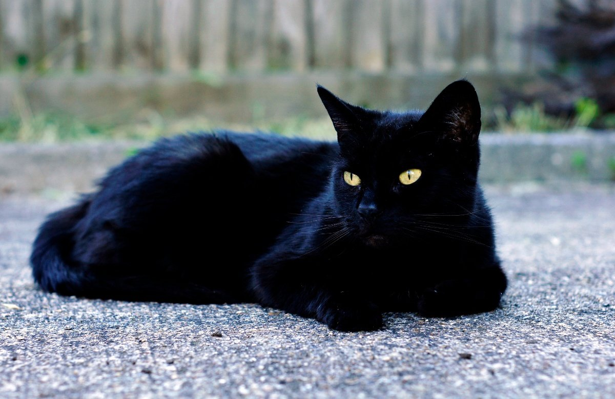 Black Cat With Yellow Eyes Tumblr