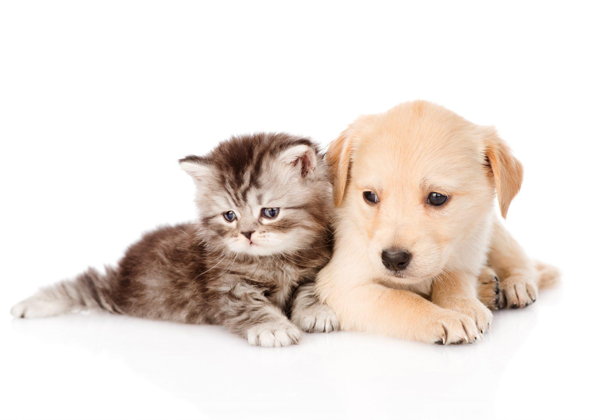 Cute Dog and Cat Wallpaper HD 2048x1421