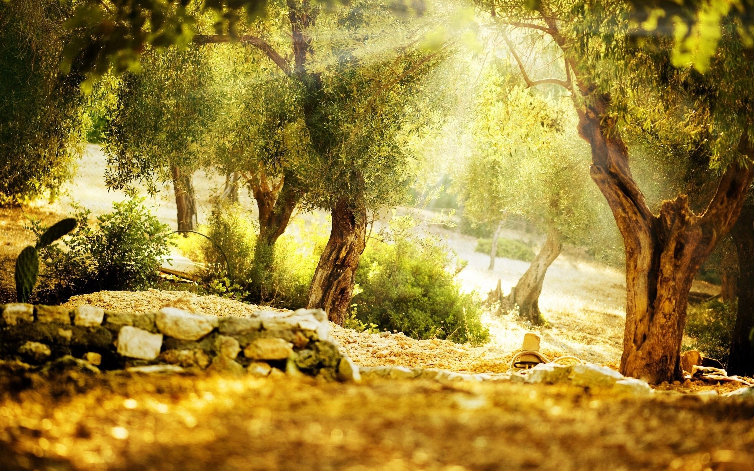 Sunbathed Olive Garden wallpapers Sunbathed Olive Garden 2560x1600