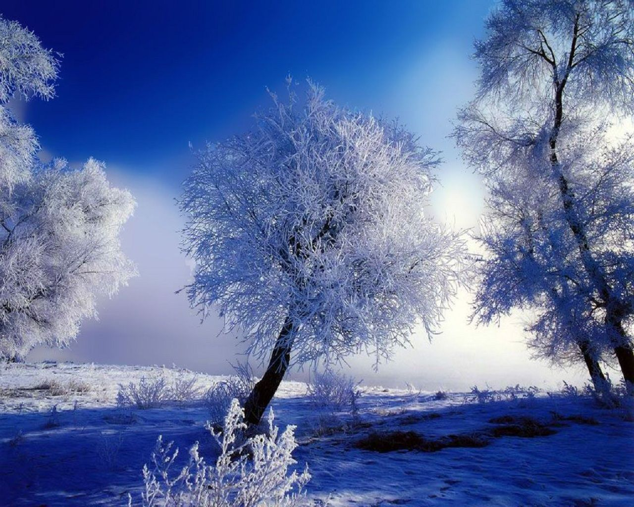 ] Ch Hnh Nn Tuyt Snow Wallpapers HD Full HD 4K 1280x1024