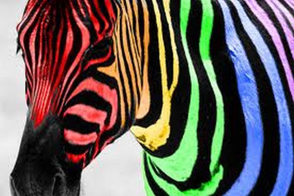 Neon Zebra Wallpaper PicsWallpapercom 1000x665