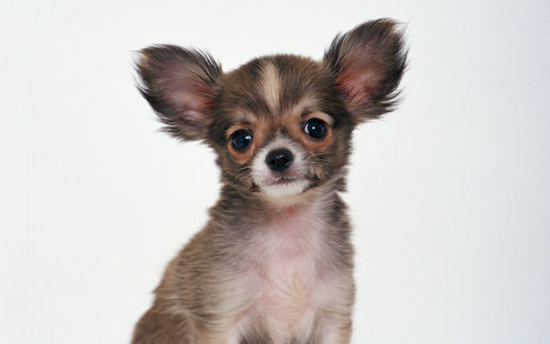 animals cute dogs nature puppy 500x313