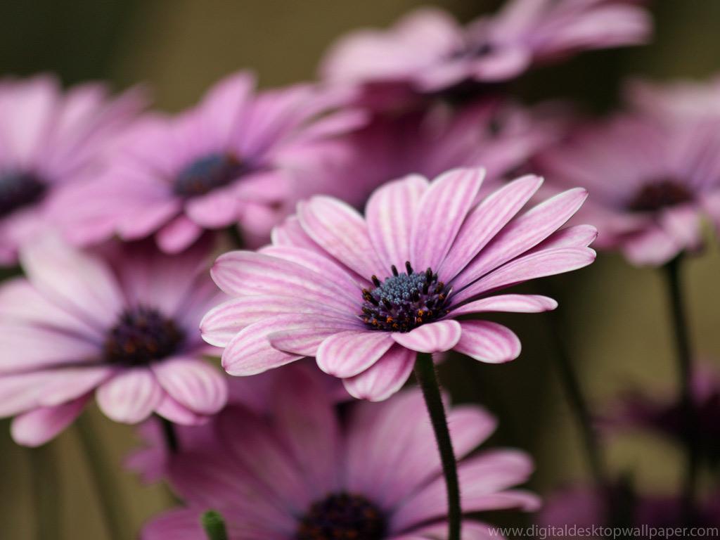Purple Flower Wallapaper 1024x768