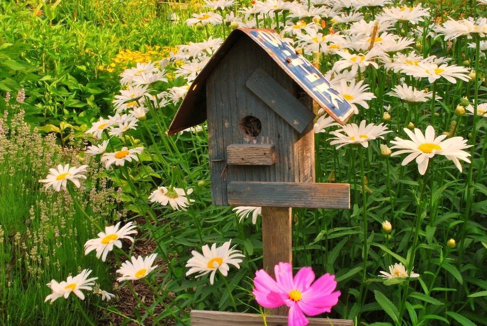 BIRD HOUSE WALLPAPER   76732   HD Wallpapers   [WallpapersInHQcom] 971x651