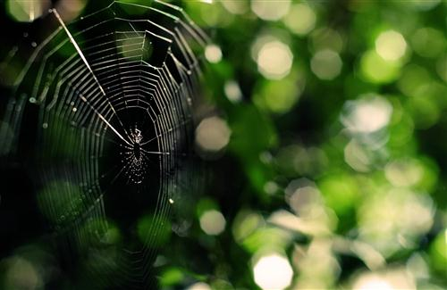 Spider Wallpapers 500x325
