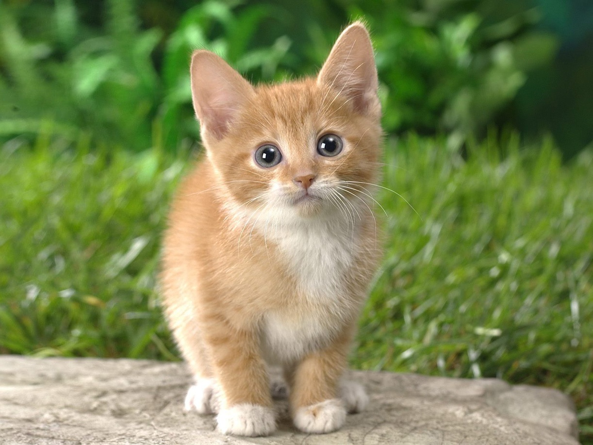 Cute Cat Looking For Camera Wallpaper Laptop 659 Wallpaper Cool 1222x917