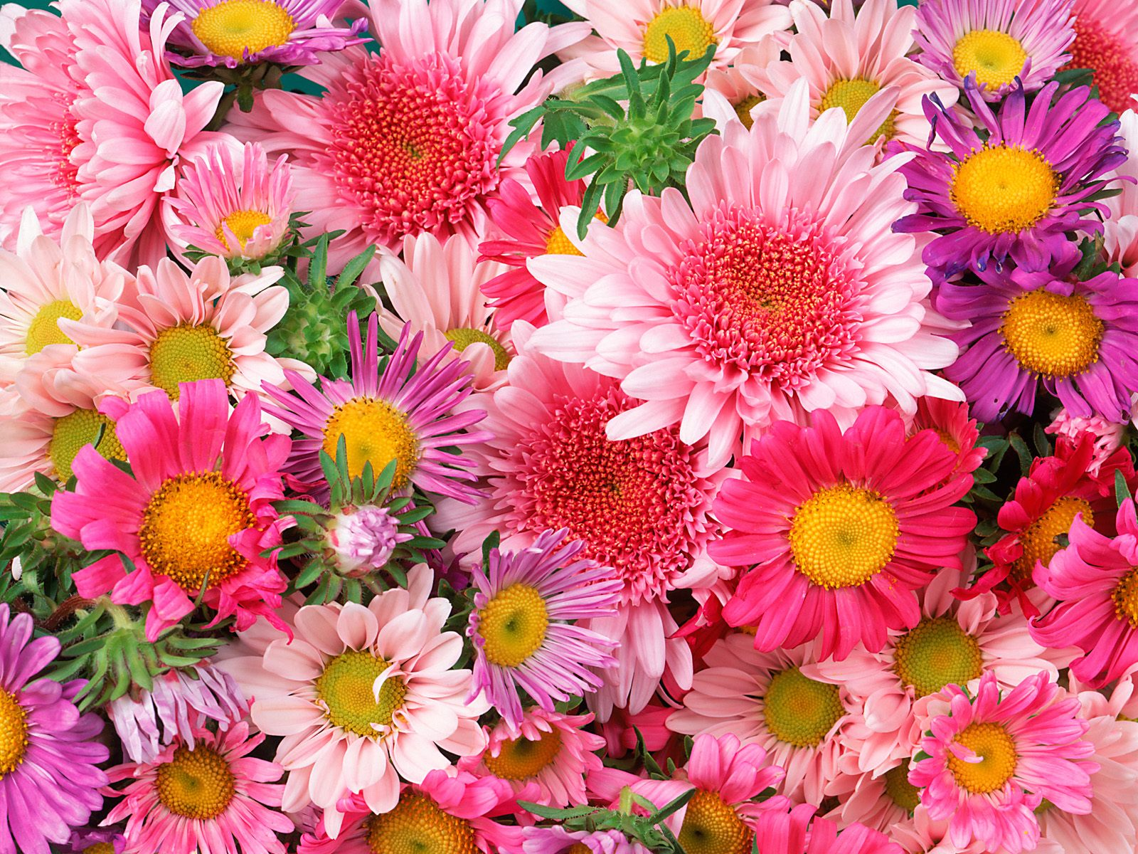 Download High quality Flowers Wallpaper Num 147 1600 x 1200 1600x1200
