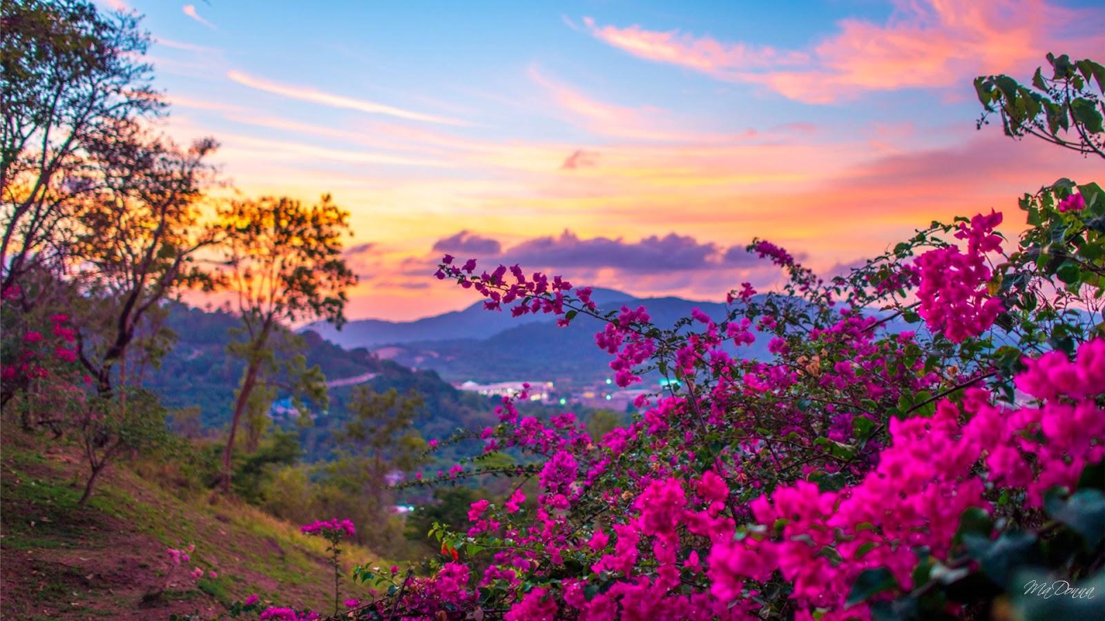 Spring Season HD Desktop Wallpaper 2015 HD Spring Season Desktop 1600x900