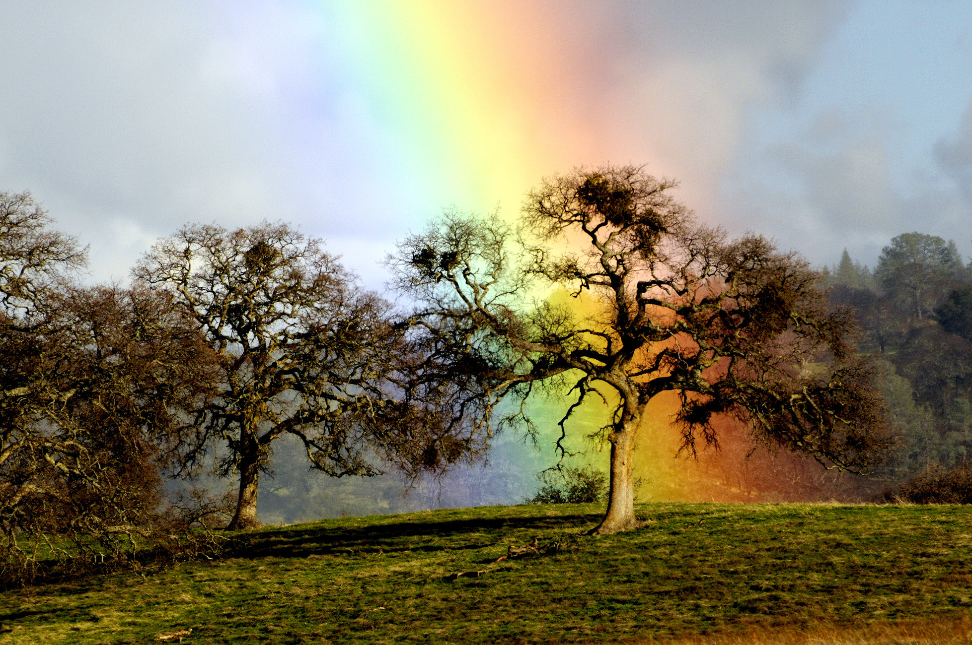 Beautiful desktop wallpaper of rainbow oak image of rainbow oak 1957x1300