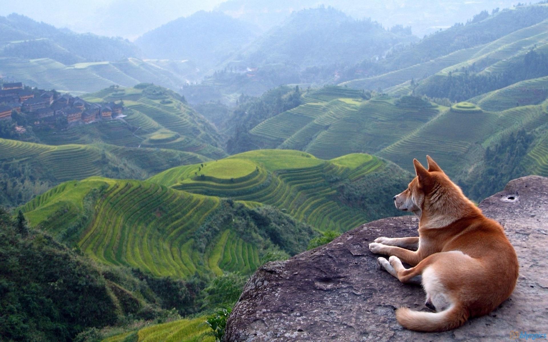 Dogs See Landscape Wallpaper 12025 Wallpaper High 1920x1200